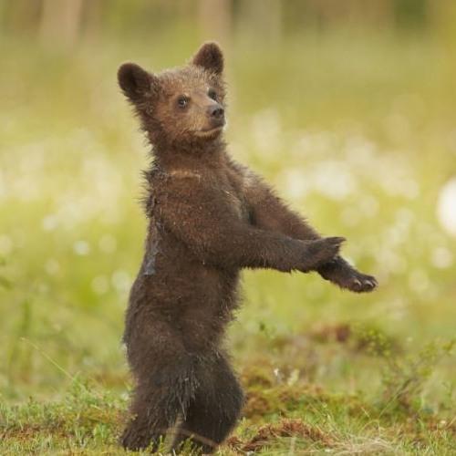 Bearmaloops's avatar
