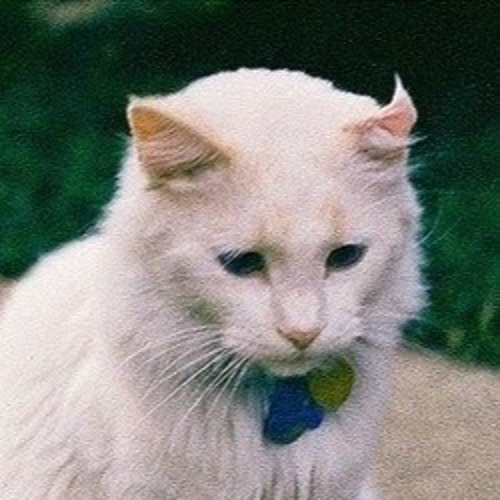 Eva Cat's avatar