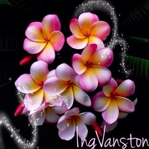 Ingither Vanston's avatar