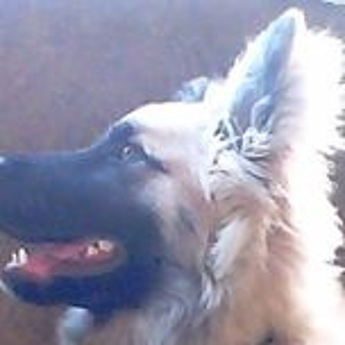 Vitor CT Lopes's avatar