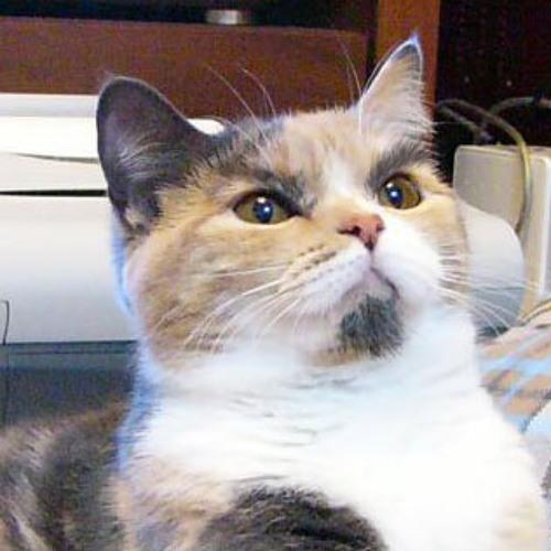 IBTypeR's avatar