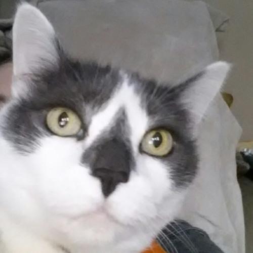 moolene's avatar
