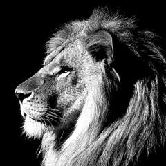 King of Beasts KOB