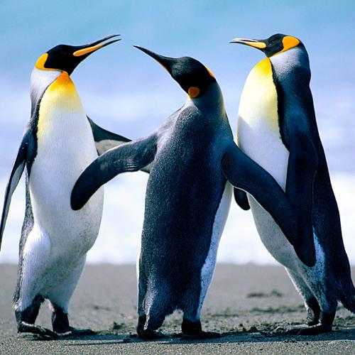 Pinguin :3's avatar