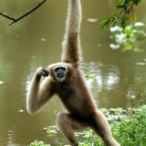 Irie the Gibbon's avatar