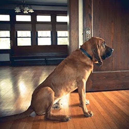SweetLittle Bloodhound's avatar