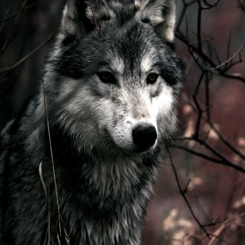 Ivan Ned Gee's avatar