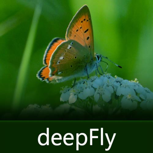 deepFly's avatar