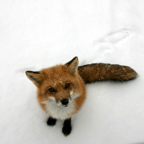 Kitsuné's avatar