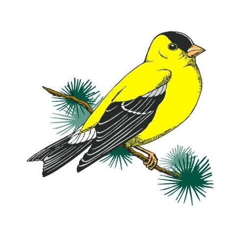 AMAZING BIRDS's avatar