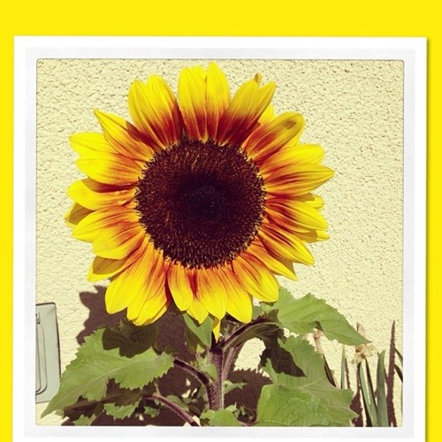 sunflower0's avatar