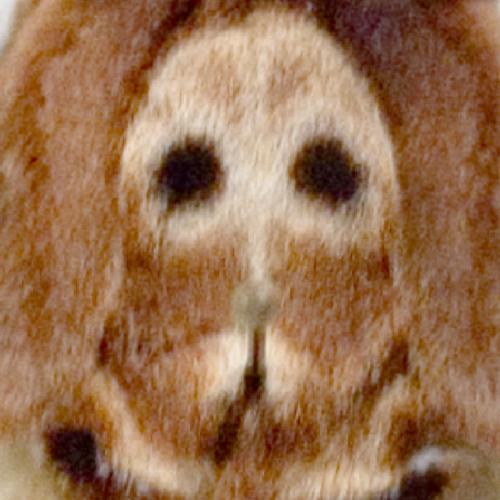 Moth Unit's avatar