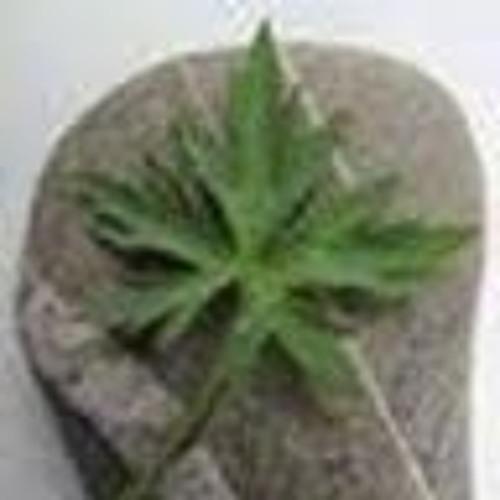 cerebralvortex1's avatar