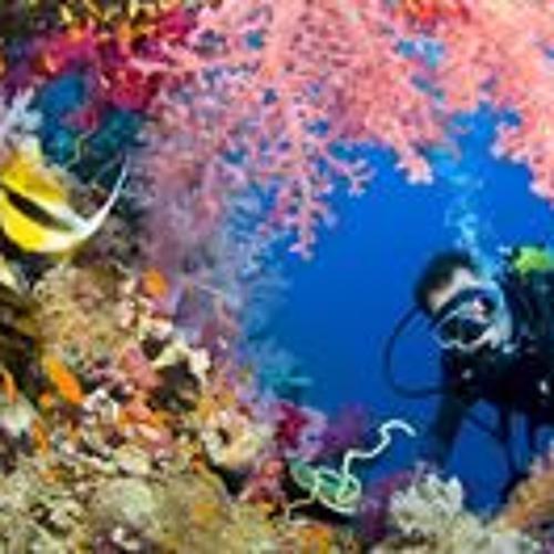 Sinai Red Sea's avatar