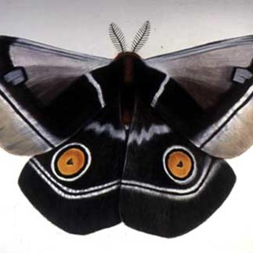 moth's avatar