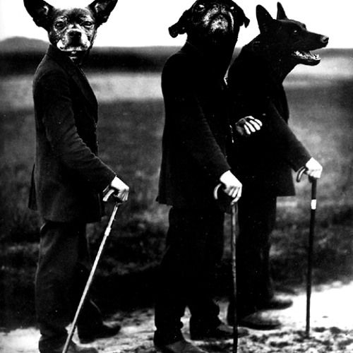 Ravenous Dogs's avatar