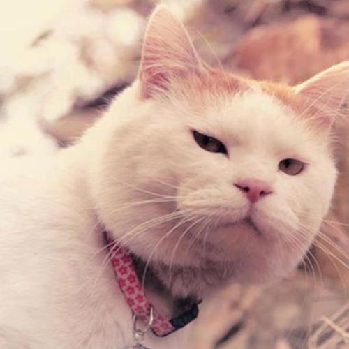 Thug Meow's avatar
