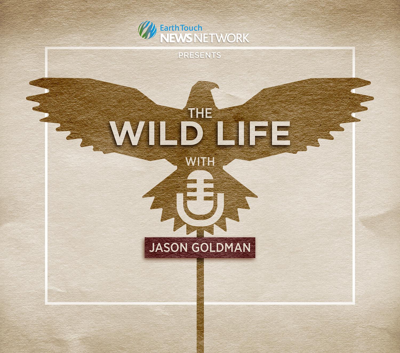 The Wild Life Podcast