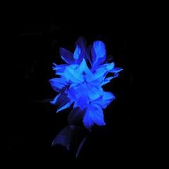 Laura the Dark Flower