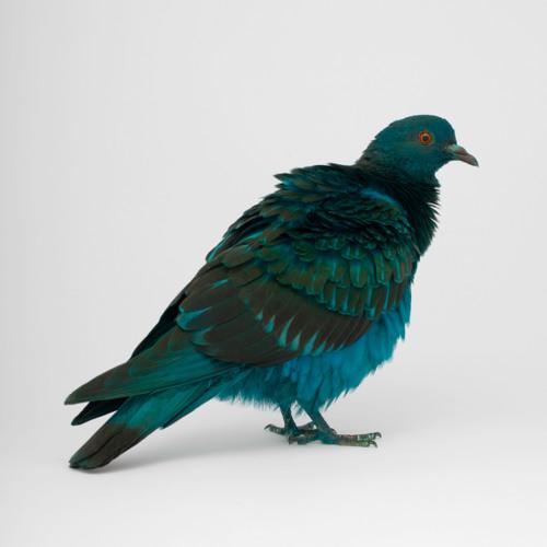 Dancing Pigeons - Ritalin