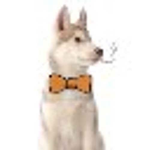 NikonPunch's avatar