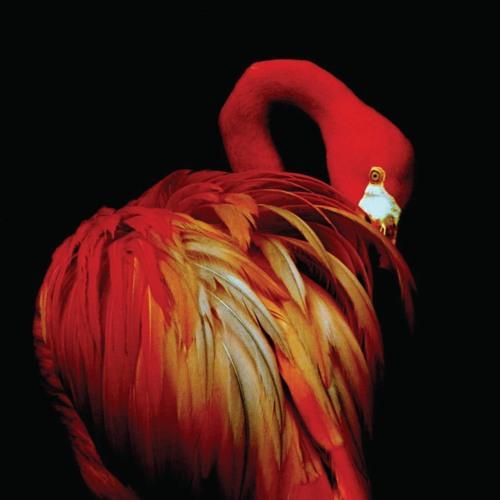 Spiegelbild be's avatar