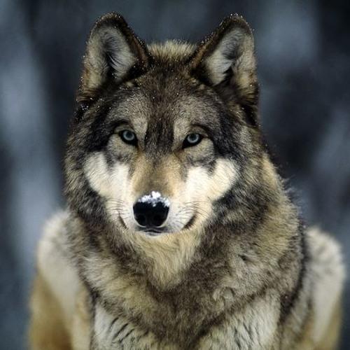 headshotwolf's avatar