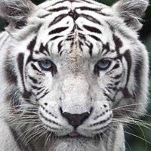 Seth Logan 3's avatar