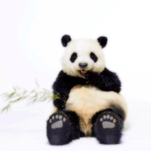 pandakeiko's avatar