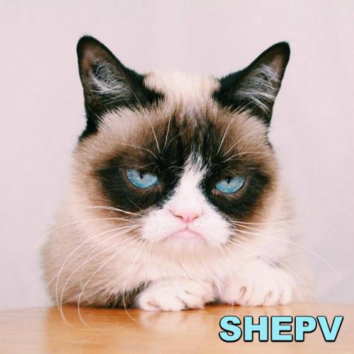 shepv's avatar