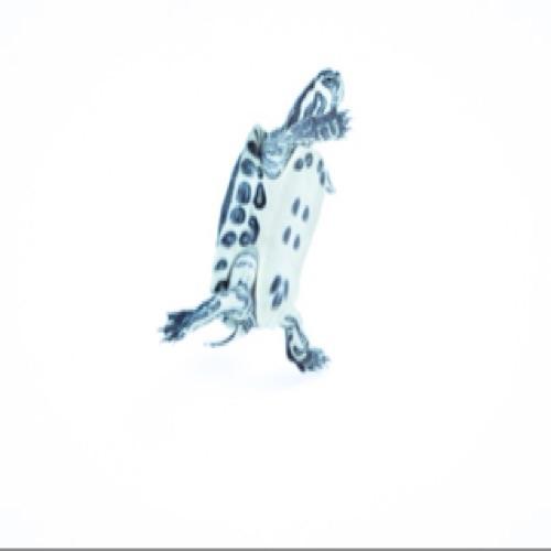 Al3x Stauff3r's avatar