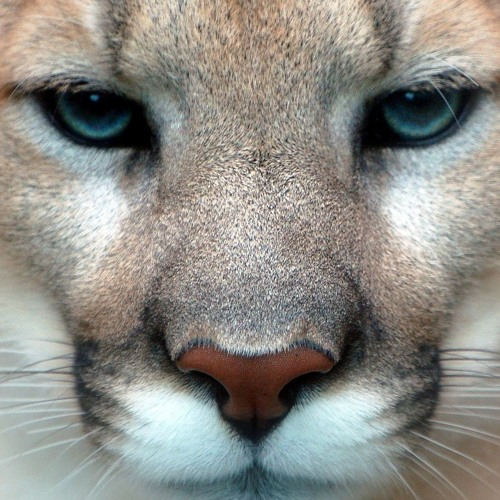 Roland Ritweiss's avatar