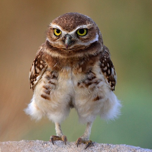 Owly Pants's avatar