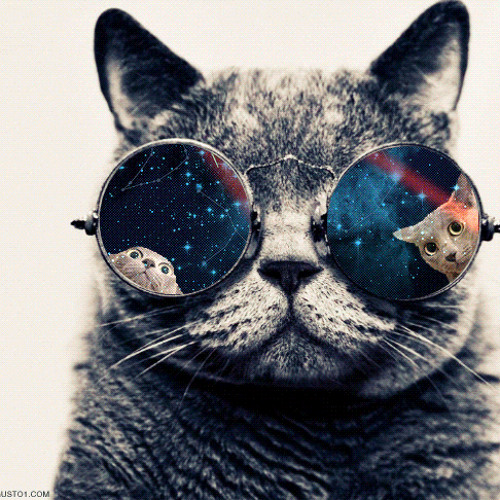 Cat Wearing Galaxy Glasses