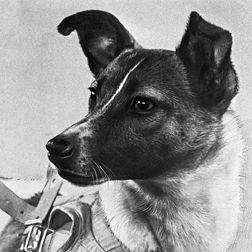 Denis Kustov's avatar