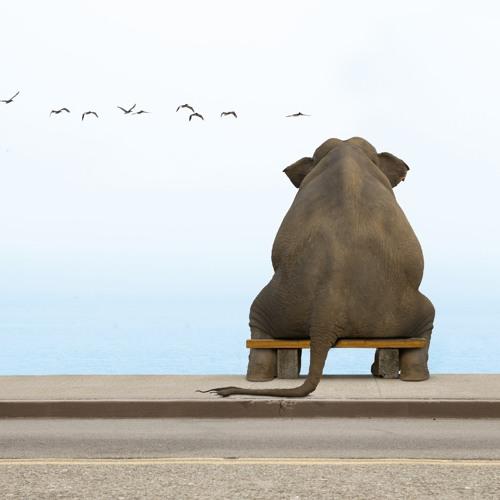 Dodu L'elephant's avatar
