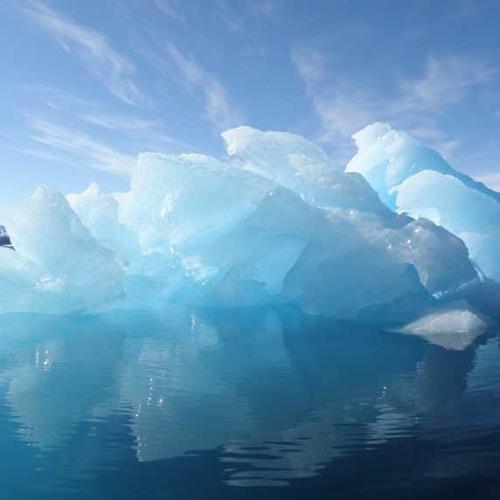 polar's avatar