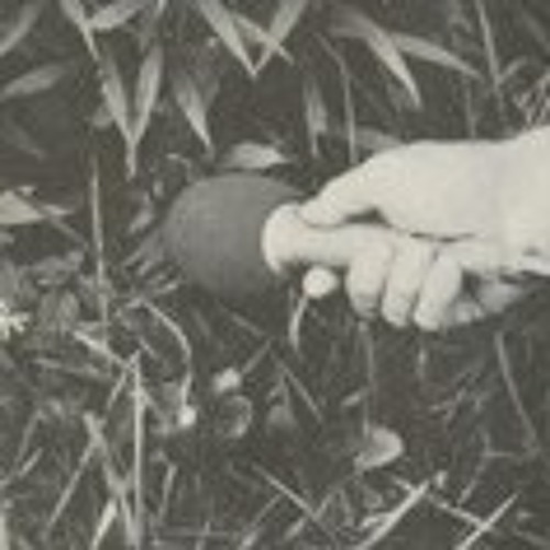 Isabelle Field's avatar
