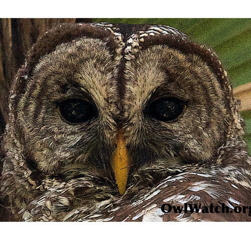 OwlGuy's avatar