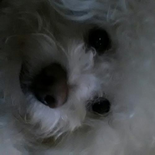 sonofmerc's avatar