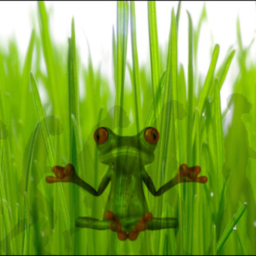 buntekugel's avatar