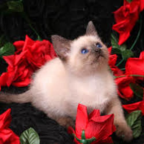 Rose Kitten's avatar