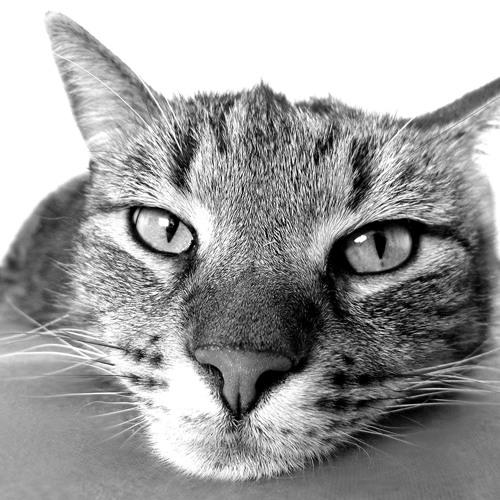 Mimas44's avatar