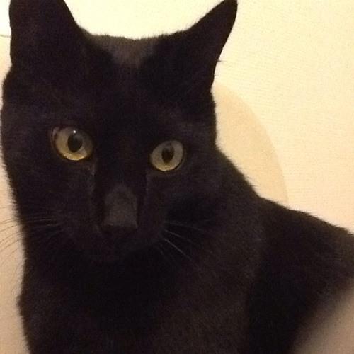 Meagane's avatar