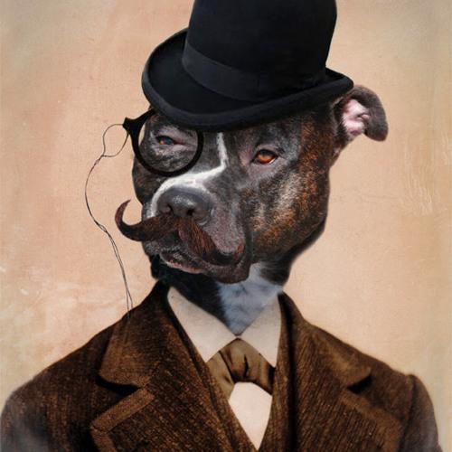 Dog makinadoug's avatar