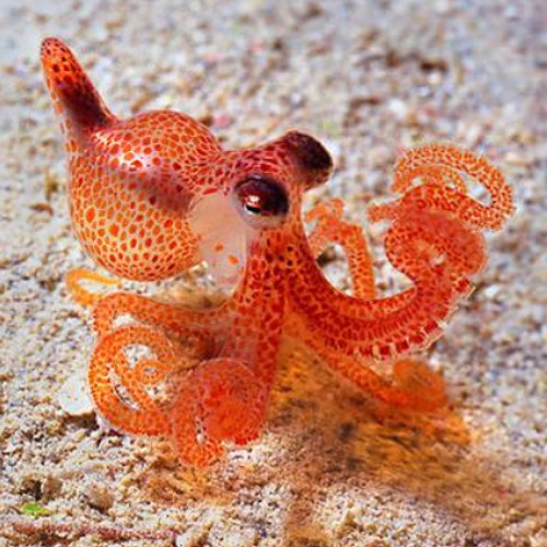 Starfish's avatar