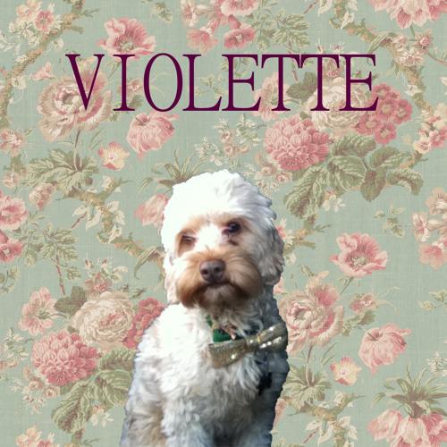 Violette's avatar