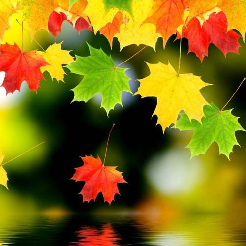 Картинки с осенними листьями анимация, открытки малыша урок