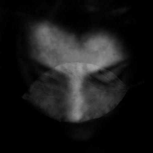 anmutua's avatar