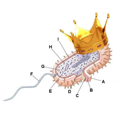 King Size Microbe's avatar
